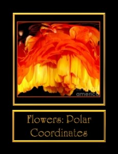 0-FlowersPolarCoo