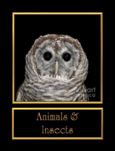0-animalsinsect