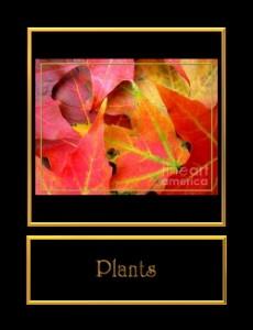 0-Plants
